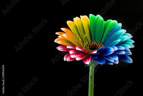 Aluminium Gerbera Colorful Flower