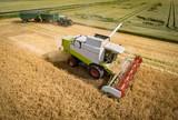 Getreideernte - Mähdrescher und Traktor mit zwei Anhängern, Luftbild - 199149241