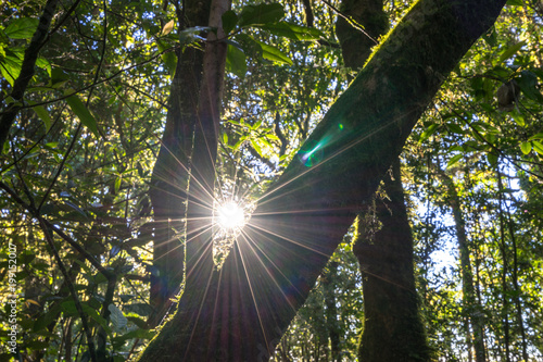 sun star light behind branch tree forest - 199152007