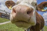 Skurrile Detailansicht einer kuh