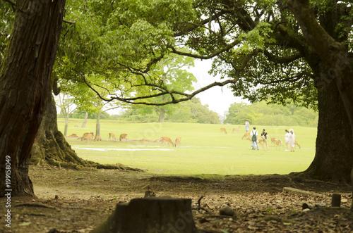 Foto op Plexiglas Zwart green landscape with deers