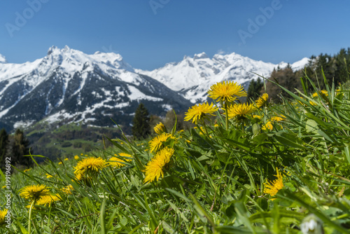 Foto op Plexiglas Natuur Frühlingserwachen in der Natur