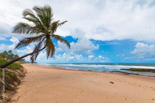 Samotny kokosowy opierać na opustoszałej tropikalnej plaży