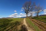 Un arbre dénudé le long du chemin