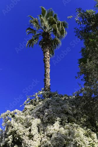 Foto op Plexiglas Donkerblauw Jardin Majorelle, botanischer Garten in Marrakesch, Marokko, Afrika