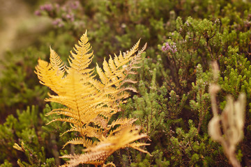 Yellow bright fern near a touristic path