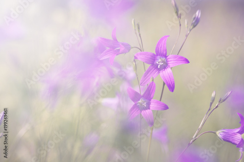 Foto op Plexiglas Purper nature romance background