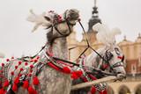 Fototapeta Horses - Piękne konie w centrum Krakowa © Monika Cyran