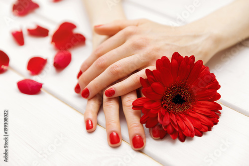 Foto Murales female hands with perfectly manicured red fingernails and flower petals