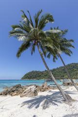 Palmen mit Traumstrand auf Pulau Besar Malaysia