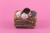 kittens in a wooden basket on a red background - 199328425
