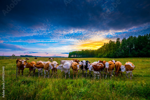 The Cattle Gang