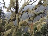 Madeira, Portugalia - wilgotne lasy deszczowe, zielone porosty na drzewach
