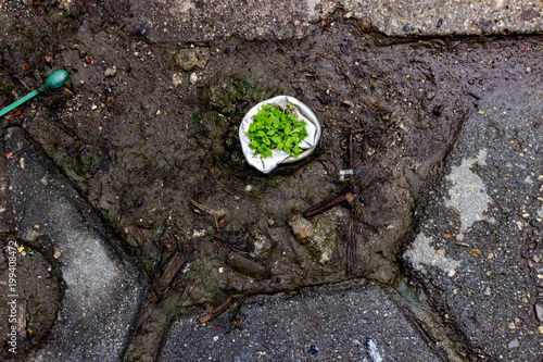 Aluminium Stenen Low grass / plant growing out of a cut sidewalk pole - nature break through in urban conditions