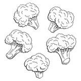 Broccoli graphic black white isolated sketch set illustration vector - 199409069