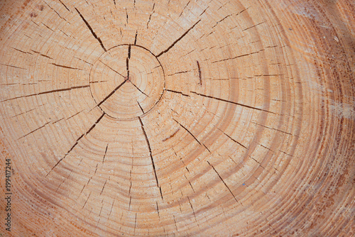 rustikale Holzscheibe, Querschnitt durch einen Baumstamm - 199417244