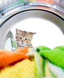 Cat looking inside wash machine with interest