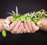 Green olives in male hand on dark background with copy space. Food background - 199430666