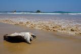 Dead turtle lying on sandy beach. - 199432495