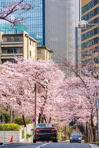 Foto op Plexiglas Lichtroze 都会の桜