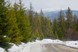 Road in the mountains in the spring, coniferous trees on the roadside - 199436818