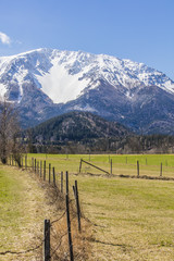 idyllic alps landscape in spring time