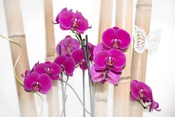 Raumdeko asiatisch mit lila Phalaenopsis Orchideen und Bambus