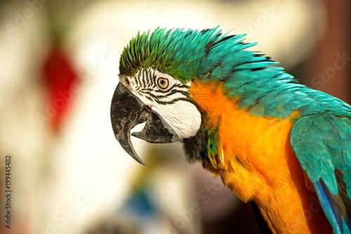 Plexiglas Papegaai parrot