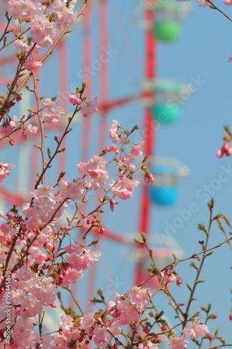 Keuken foto achterwand Amusementspark 桜