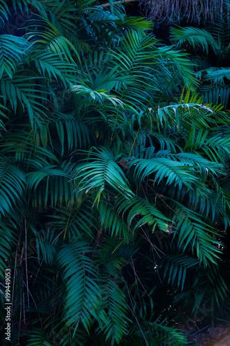 Foto Murales Plante exotique