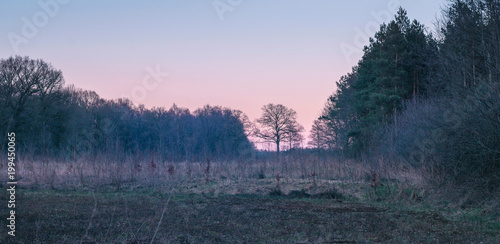 Fotobehang Nachtblauw Field with pine and deciduous trees in winter sunset.