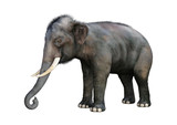 3D Rendering Indian Elephant on White