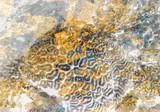 Fototapeta Do akwarium - Abstrakcja rafa koralowa  © Justyna