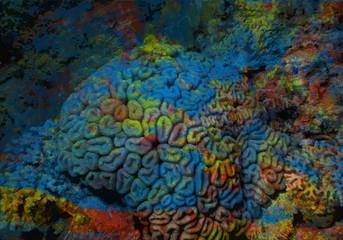 Abstrakcja rafa koralowa