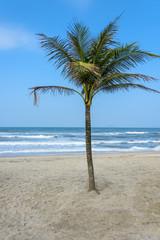 Coconut tree on a tropical beach