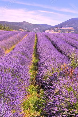 Aluminium Lavendel champs de lavande