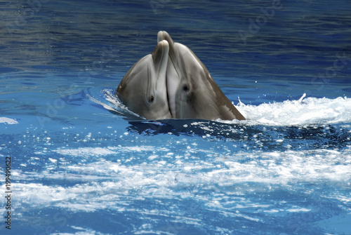 Aluminium Dolfijn Dolphin