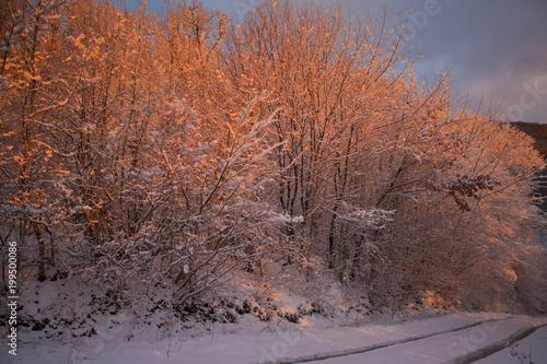 Fotobehang Lavendel Winter Forest Drawn By Sunrise