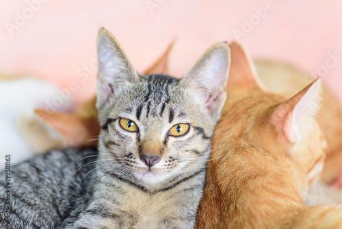 Zakończenie up kot twarz, zwierzę domowe w domu
