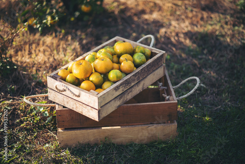 orange box on wooden table