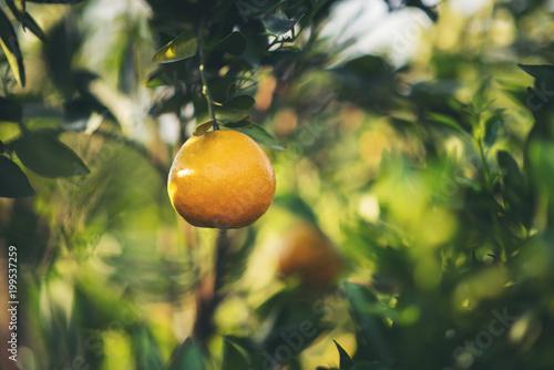 Pomarańczowy ogród