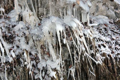 Foto Murales brindilles glacées