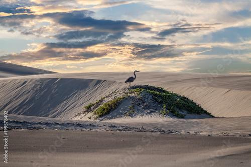 beach sand dunes landscape view - 199578402