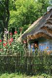 stara wiejska chata pokryta strzechą i przydomowy ogródek z malwami