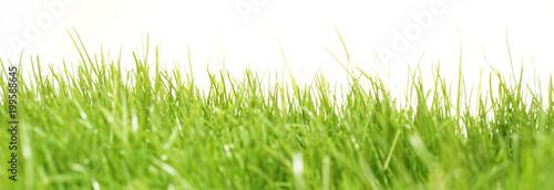 green grass meadow lawn blade of grass - 199588645
