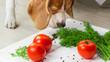 Dog sniffs raw vegan food