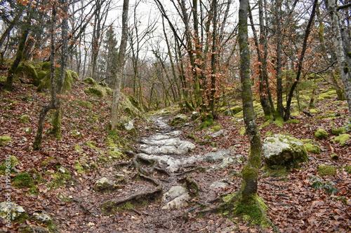 Fotobehang Weg in bos foret