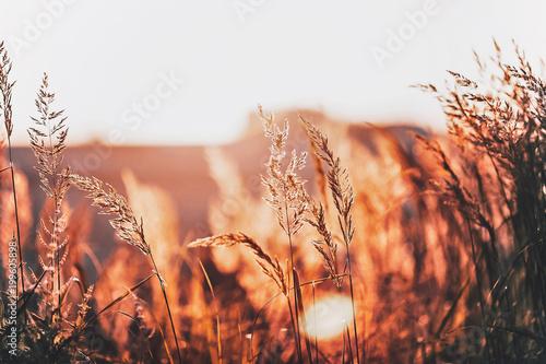 Fotobehang Gras Nature Flowers