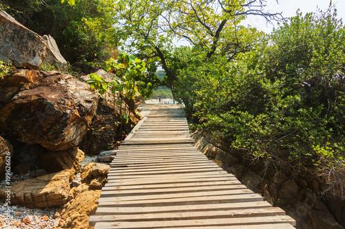 Fotobehang Weg in bos pathway in the garden.