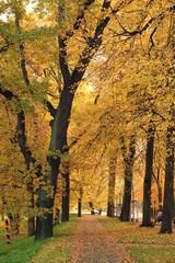 herbst, wald, baum, fall, park, natur, landschaft, baum, blatt, gelb, laub, blatt, jahreszeit, ausserhalb, orange, holz, green, holz, october, eiche, road, bahn, gold, farbe, ast